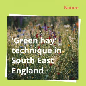 Cutting it fine – 'Green hay' technique – Woodland Trust in the South East