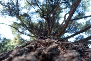 10 Golden rules for tree-planting